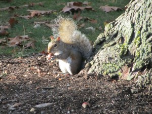 Squirrell on Penn State Campus